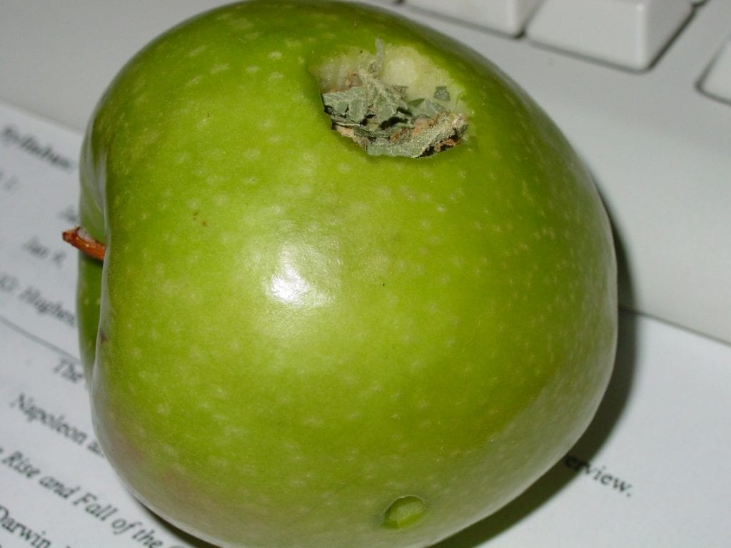 A green apple that has been made into an apple pipe. Another common method of smoking weed.