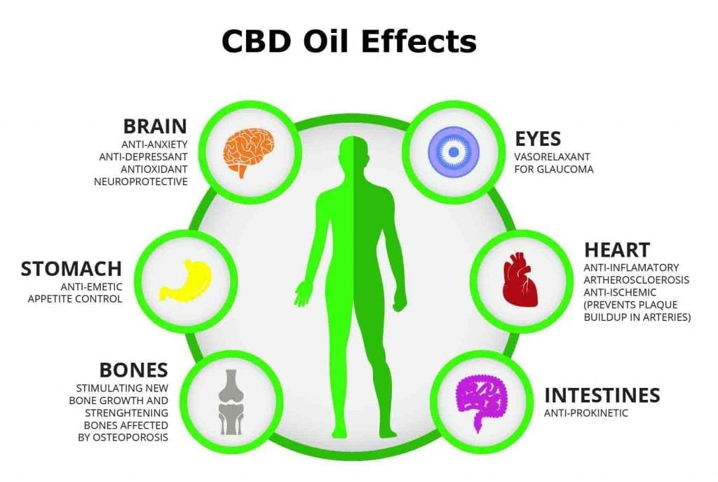 CBD oil effects compared to THC effects.