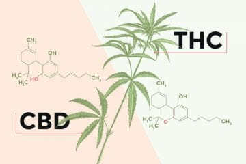 The chemical structures and differences that makeup Tetrahydrocannabinol (THC) and Cannabidiol (CBD)