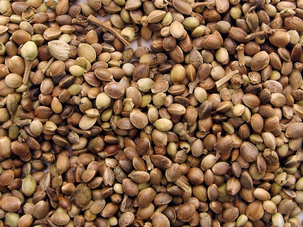 mountain of cannabis seeds