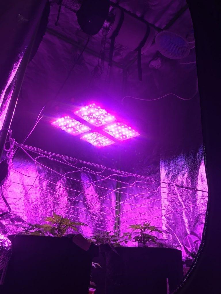 Best indoor grow tent for the closet.